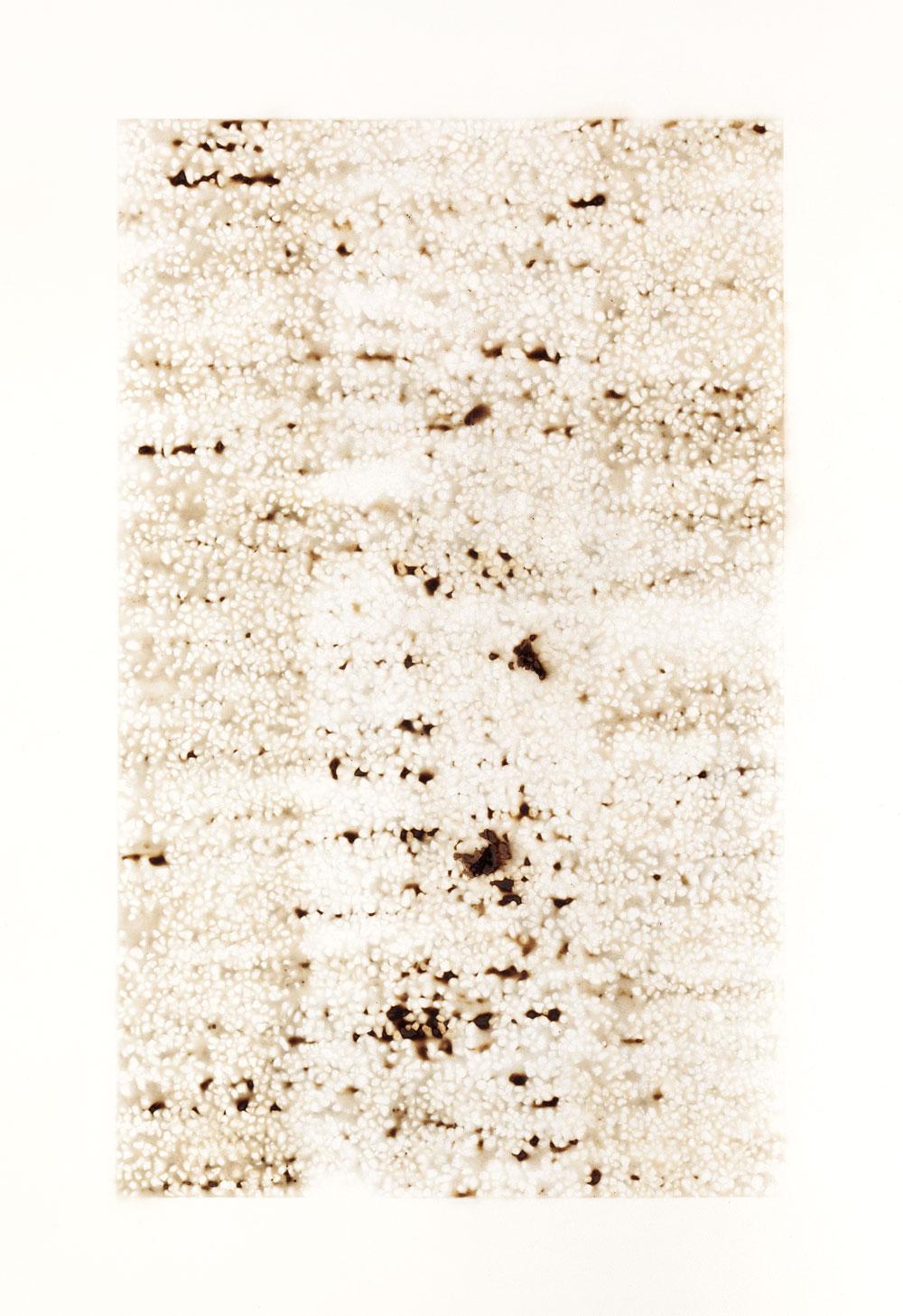 Jacob Whibleyreciprocal symmetry (wreak form)19.5 x 28