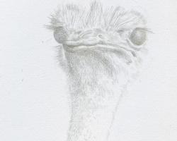 Lauchie Reid Portrait of a Bird, 2014 Silverpoint on Paper. 2 x 3 in.